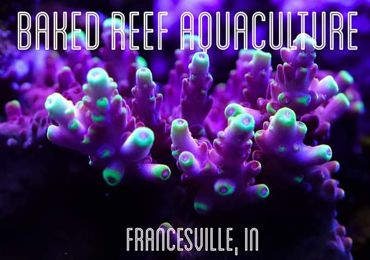 Baked Reef Aquaculture